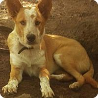 Adopt A Pet :: Jack - Charlestown, RI
