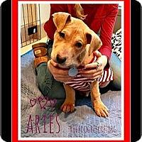 Adopt A Pet :: ARIES - Milton, GA
