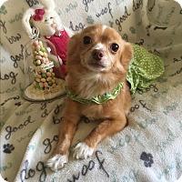 Adopt A Pet :: Ruby - Lodi, CA