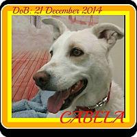 Adopt A Pet :: CABELA - Albany, NY