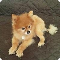 Adopt A Pet :: Patton - conroe, TX