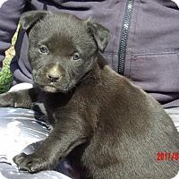 Adopt A Pet :: Inca (6 lb) Video! - Sussex, NJ