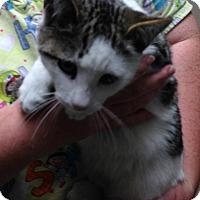 Adopt A Pet :: RIDER - Putnam Hall, FL