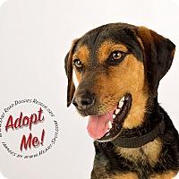 Adopt A Pet :: Waylon - Gillsville, GA