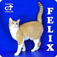 Adopt A Pet :: Felix - Carencro, LA
