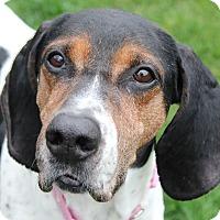 Adopt A Pet :: Emma - Aurora, IL