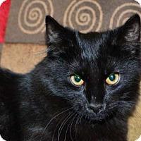 Adopt A Pet :: Touloouse - Buford, GA
