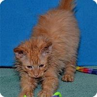 Adopt A Pet :: Wuzzy - Lenexa, KS