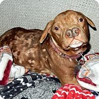 Adopt A Pet :: Picasso - O'Fallon, MO