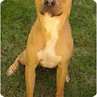 Adopt A Pet :: A-Rod - Chicago, IL