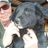 Adopt A Pet :: Spencer - Glastonbury, CT