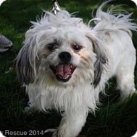 Adopt A Pet :: Kirby - Broomfield, CO