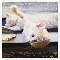 Adopt A Pet :: Buffy & Walter- too cute! - Los Angeles, CA