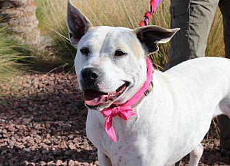 Cattle Dog/American Bulldog Mix Dog for adoption in Las Vegas, Nevada - NANA