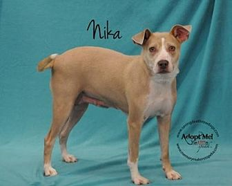 Pit Bull Terrier Mix Dog for adoption in Topeka, Kansas - Nika