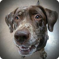 Adopt A Pet :: Dory - Wilmington, OH