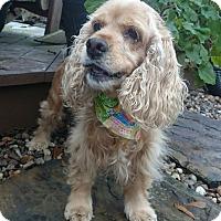Adopt A Pet :: Sienna - Sugarland, TX