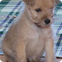 Adopt A Pet :: DARREN/pending - Anderson, SC