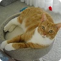 Adopt A Pet :: Flame - Tampa, FL