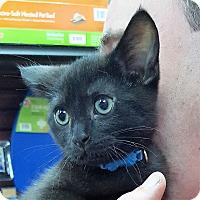 Adopt A Pet :: Cosmos - Toronto, ON