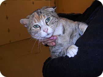 Domestic Shorthair Cat for adoption in Atlanta, Georgia - Bunny