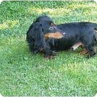 Adopt A Pet :: Willie - San Jose, CA