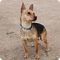 Adopt A Pet :: Brea - Fountain, CO
