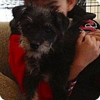 Adopt A Pet :: Minnie - Lake Forest, CA