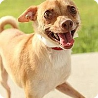 Adopt A Pet :: Mikey - Knoxville, TN