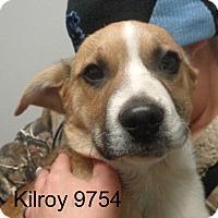 Adopt A Pet :: Kilroy - baltimore, MD