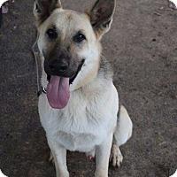 Adopt A Pet :: Jack - Greeneville, TN
