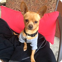 Adopt A Pet :: Bruiser - Burlingame, CA
