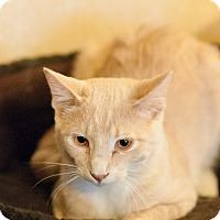 Adopt A Pet :: Brewtus - Faribault, MN