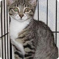 Adopt A Pet :: Sydney - Catasauqua, PA
