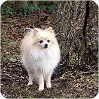 Adopt A Pet :: Fritz - Washington, NC