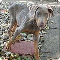 Adopt A Pet :: Penny--adopted!! - New Richmond, OH