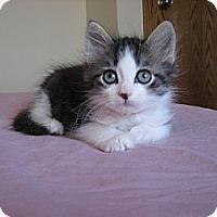 Adopt A Pet :: Connor - Eagan, MN