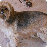 Adopt A Pet :: Sasha - dewey, AZ
