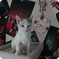 Adopt A Pet :: Cancun - Phoenix, AZ