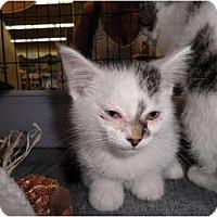 Adopt A Pet :: Wasbi - Warren, MI