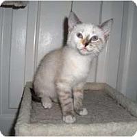 Adopt A Pet :: Leela - Richmond, VA