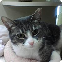 Adopt A Pet :: Bulgara - Chicago, IL