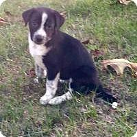 Adopt A Pet :: Bailey - Marlton, NJ