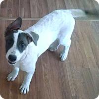Adopt A Pet :: Ginger PENDING! - Spring City, TN