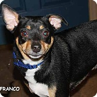 Adopt A Pet :: Franco - South Bend, IN