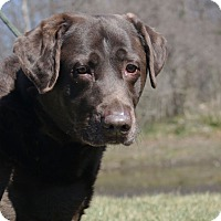 Adopt A Pet :: Daisy A34887885 - Westampton, NJ