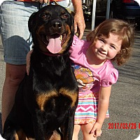 Adopt A Pet :: Duke (95 lB) GREAT Family Pet - Niagara Falls, NY