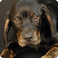 Adopt A Pet :: Kade - Newland, NC