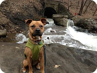 American Pit Bull Terrier Mix Dog for adoption in Rexford, New York - Jenna