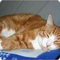 Adopt A Pet :: Neil - Lake Ronkonkoma, NY
